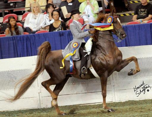 McGee: Life of a Saddle Seat Rider