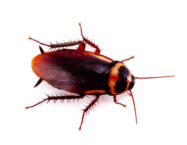 Cockroach+Invasion
