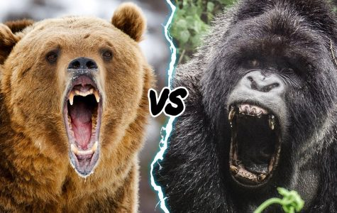 Gorilla vs Grizzly Debate: Who Would Win?