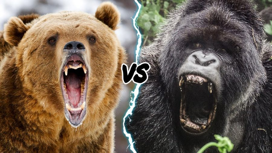 Opposing Viewpoints: Gorilla vs Grizzly Debate