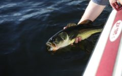 Bass Fishing: The Newest High School Sport Taking The Country By Storm